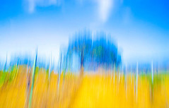 edwinloyolaNewYorkPortfolioReviewSummer01 (Edwin Loyola) Tags: autumn winter summer abstract fall nature seasons fineart fourseasons icm esl intentionalcameramovement edwinsloyola edwinloyola edwinloyolaphotography eslphotography