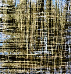 ### (c-or^^) Tags: pattern forrest doubleexposure wald textur doppelbelichtung pentaxart 20150208imgp2985