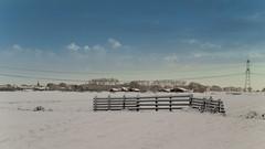 Winter weather 2010 -  Polder Stein - Haastrecht (Frans Berkelaar) Tags: nature nederland natuur nl winterweather zuidholland haastrecht winter2010 goudagoverwelle steinsegroen groenehartvanholland polderstein gemeentekrimpenerwaard