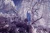 Winter in Summer (LukeOlsen) Tags: usa oregon portland ir infrared colorinfrared fallentree zentai colourinfrared zentaisuit lukeolsen