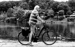 Ente kommt von rechts... (Gitta Martin) Tags: mann ente schwarz weis hariksee fahrradfahrer streetfotografie strasenfotografie