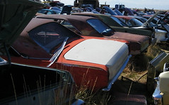 Where Dodge Darts go to die (coconv) Tags: pictures auto door old 2 classic cars abandoned hardtop 1969 car yard vintage dead photo junk rust automobile die image photos antique decay go picture rusty images vehicles where photographs photograph 1967 vehicle dodge rusting junkyard 1970 1968 mopar autos collectible 69 recycle collectors 70 scrap salvage darts wrecked 67 automobiles swinger decaying swingers 68 blart