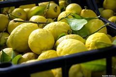 Lemon Femminiello (Rodolfo Giuliana) Tags: green yellow lemon citrus limone agrumi igp femminiello