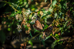 Taiwan-121113-246 (Kelly Cheng) Tags: travel color colour green tourism nature animals horizontal fauna butterfly daylight colorful asia day taiwan vivid nobody nopeople colourful traveldestinations  northeastasia