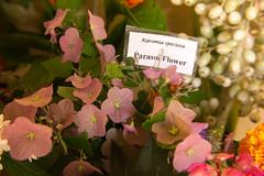 Parasol Flower