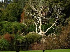 Stark amongst the green (Lesley A Butler) Tags: nature garden landscape australia melbourne victoria royalbotanicgardens