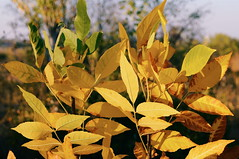 2015-09-29 10.13.03 1 (anastasiya_klenyaeva) Tags: sky nature yellow russia autmn     saratov vsco vscocam vscorussia vscosaratov
