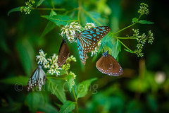 Taiwan-121113-283 (Kelly Cheng) Tags: travel color colour green tourism nature animals horizontal fauna butterfly daylight colorful asia day taiwan vivid nobody nopeople colourful traveldestinations  northeastasia