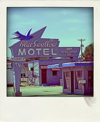 Blue Swallow MOTEL (Leo Reynolds) Tags: polaroid fake faux phoney fakepolaroid fauxpolaroid poladroid phoneypolaroid xleol30x