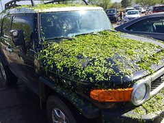 Leaf-covered car after hail (f l a m i n g o) Tags: car hail leaf damage 19275