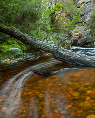 Tannin flows (Rich Morrison) Tags: park mountain river nikon dove australia national tasmania cradle d5000