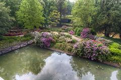 Schlosspark Arcen (Tatjana_2010) Tags: rhododendron rhododendrongarten schlossparkarcen niederlande netherlands