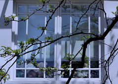 Teddies in Window One / Les ours en peluche no. 1 (H - - J) Tags: toronto window outdoor blinds rosedale