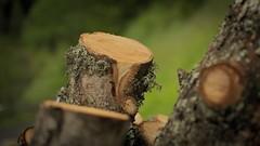 NEH_6973 tronco (Nestor Neroman) Tags: primavera trunk tronco muschio montagna licheni gribbio