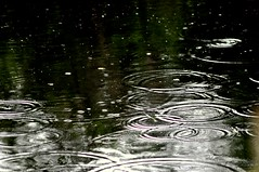 Todays weather (janjansfotos) Tags: uk green nature wet water rain weather reflections pond rings raindrops metrological
