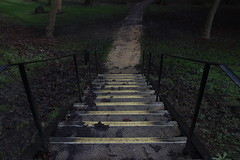 Stairs (domjuniorlemma) Tags: wood morning flowers autumn trees winter red summer sun flower tree green fall nature colors grass leaves animals yellow forest photoshop canon garden insect photography photo leaf reflex spring branch violet insects photograph rays mothernature chlorophyll clorophilla