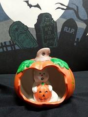 Ghost Holding a Pumpkin in a Pumpkin (stevensonmetal) Tags: halloween pumpkin holding jackolantern ghost pumpkins