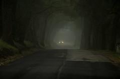 No Cell Service (blueteeth) Tags: countryroad treetunnel mist headlights dark moody eerie