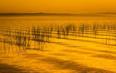 Kabekona Lake Fog (Wild Birdy) Tags: mn minnesota hubbard laporte usa north kabekona lake water sunset fog foggy reeds grass texture colorful