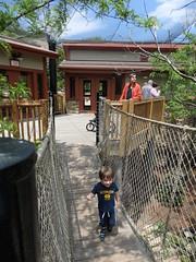 5/22/16 - Akron Zoo: Byron and Tristan (mavra_chang) Tags: birds animals turkeys wildturkeys