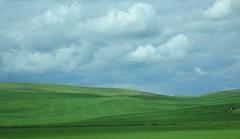 Green is nice ! <> C'est beau ce vert ! (France-) Tags: sky usa green nature field clouds champs vert line ciel colton minimalism washingtonstate nuage paysage 888 campagne champ ligne