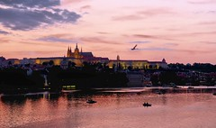 Hradany with a swan (fewpictures4u) Tags: light sky evening scenery prague hradany
