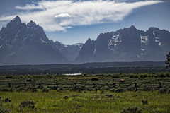 Tetons in June (BrownZelip) Tags: mountains wyoming tetons