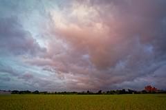 2016-07-07 18.57.29 (pang yu liu) Tags: 2016 07 jul   pate  typhoon  dusk farm