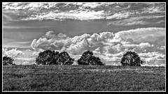 Black and white (patrick.verstappen) Tags: hdr montenaken belgium cloudy clouds trees photo picassa pinterest pat yahoo gingelom google d7100 facebook flickr nikon summer sigma