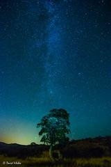il.luminat per les estrelles (vilchesdavid) Tags: longexposure sky tree night stars arbol noche catalonia estrellas nocturna milkyway empord largaexposicin vialactea