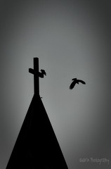 Steeple Crows ('Dazza' Quarin) Tags: church cross steeple creepy catholicchurch crow crows