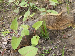 P5063820 (Raccoon Photo) Tags: flowers trees friends ohio wild summer lake cute green nature animals creek river walking fun spring furry squirrel squirrels friend funny stream hiking walk nuts may handsome peanuts hike deer friendly peanut wildanimal parma nut reservation walkinginnature metropark metroparks wildsquirrel parmaohio bigcreekparkway hikinginnature stateroadpark