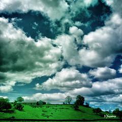 Summer Cloudland