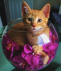 Cute for no reason! (beauty_n_light) Tags: pet pets cute cat portraits kitten feline sweet tabby adorable bowl