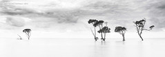 Fluid (...Kush...) Tags: bay nikon australia brisbane mangrove queensland overcastsky beachmere d700 nikond700 nikon247028