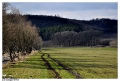 Fakó március (Pszili) Tags: road nature march hungary természet ungarn tavasz magyarország március út berkenye nógrád szokolya
