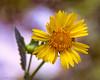 EOR_2440 (z.benabbou) Tags: flower nikon d800 amazingdetails