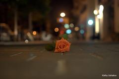 Left behind (katushau) Tags: orange flower rose night pavement streetlevel