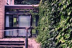 (chimidoro) Tags: uk abandoned overgrown heaven doorway letterbox derelict deserted  chimidoro  roxannekirigoe chimidoro   roxannekirigoe shikijitsu