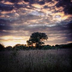 Sunset at Hounslow Heath nature reserve (dksesh) Tags: square squareformat sutro seshadri hounslowheath iphoneography instagramapp uploaded:by=instagram dhanakoti seshfamily haritasa foursquare:venue=4dfa605c2271faf21fef5487