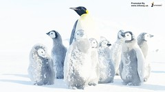 wallpaper penguin antarctica penguin antarctica snow (Infoway LLC - Website Development Company) Tags: wallpaper beautiful wonderful nice superb awesome images exotic watercolour hd incredible breathtaking classy mindblowing littlepenguins penguinbaby softwaredevelopmentcompany ecommercewebdevelopment walkingpenguinwallpaper wallpaperpenguinantarcticapenguinantarcticasnow penguinswintersnowantarcticanimals penguinswallpaperhd wallpaperchristmaspenguinsanta sealbabypenguinswallpaper