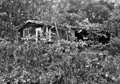 Rural Camouflage (drei88) Tags: ohio abandoned overgrown neglect rural condemned scary darkness grim decay spooky oldhouse lonely portage abandonment hiram notrespassing mantua deterioration hardluck uninviting portagecounty garrettsville hiramtownship oncewashome