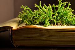 Living Words (megan423) Tags: plant green book succulent alive planter