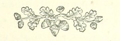 Image taken from page 123 of 'Lauterdale: a story of two generations. [By J. Fogerty.]' (The British Library) Tags: bldigital date1873 pubplacelondon publicdomain sysnum002089962 small vol01 page123 mechanicalcurator imagesfrombook002089962 imagesfromvolume00208996201 acorn border decoration oak sherlocknet:category=decorations