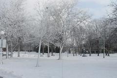 Niagara Falls Deep Freeze (William Wilson 1974) Tags: winter snow cold ice wonder niagarafalls pretty freeze land westernnewyork wny niagarafallsny