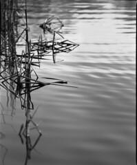 Reflections (Dad) Tags: london nature water mediumformat reflections kodaktmax400 batterseapark kodaktmax mamiyarb67pros kodaktmaxdeveloper film:iso=400 film:brand=kodak developer:brand=kodak film:name=kodaktmax400 developer:name=kodaktmax filmdev:recipe=9376