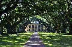 Oak Alley (Rob McC) Tags: usa green oak louisiana plantation oakalley deepsouth