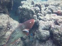 Snorkeling (Jason Cales) Tags: fish hawaii waikiki oahu snorkeling hanaumabay