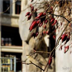 Quedlinburg (RiesenFotos) Tags: quedlinburg deutschland germany riesenfotos 2014 sel55f18z unescoweltkulturerbe unescoworldheritage ph014 ph017