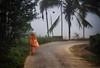 Morning walk (Daniel Robert Kelly) Tags: india wayanad kalpetta
